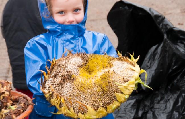 Gtech sunflower harvest - 23