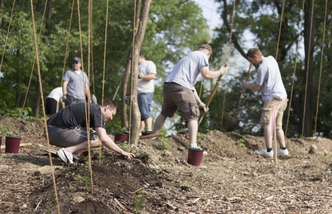 Hops_Planting_7