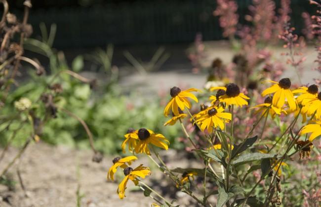 John_Garden_Flowers_1