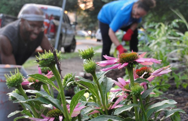 Flowers on Cynthia's Welcome Corner