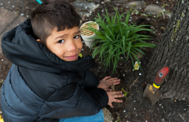 Boy planting under tree - color